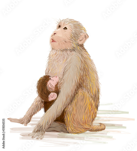 hand drawn illustration of  the monkey feeding newborn baby