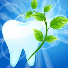 Белый зуб и мятная веточка