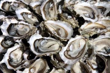 huîtres ouvertes sur un plat