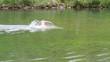nage lac
