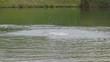 Nageur en lac
