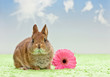 baby rabbit with flower