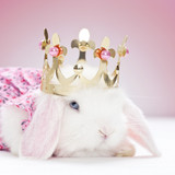 white baby rabbit with golden crown