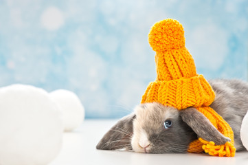 little rabbit with woolly hat