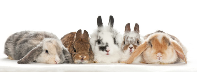 portrait of baby rabbits with white background