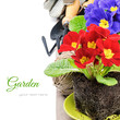 Colorful primrose flowers and garden tools