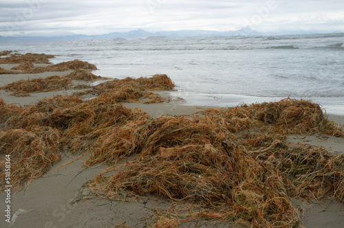 Decomposing seaweed