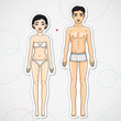 Male and female body Asian ethnic