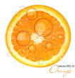 Fresh juicy orange background vector illustration