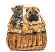 Sharpei puppy and spotted Leopard cub in a wicker basket