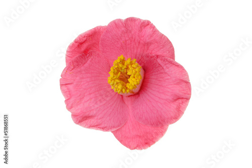 single flower isolated