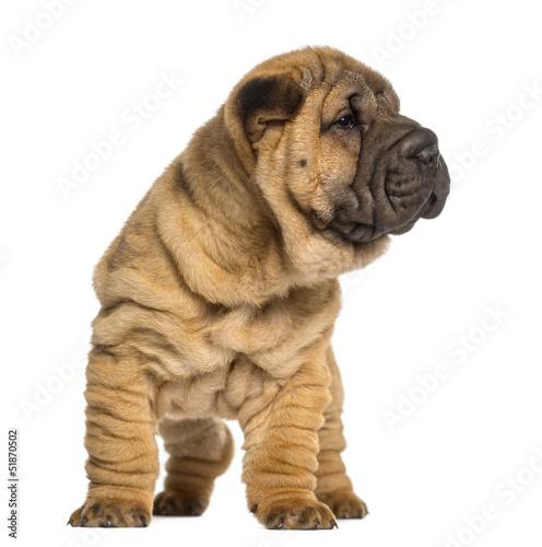 different types of dog breeds norwegian dog breeds all dog breeds ...