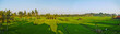 Spring ricefields panorama in morning light, Ubud, Bali