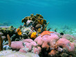 Photo of a colorful coral reef