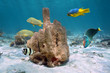 Tube sponge with colorful tropical fishes