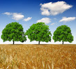 trees on wheat field