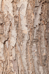 Pattern of the bark
