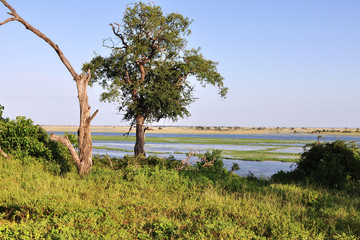 african landcape near Chobe river in Botswana