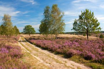 Weg durch Heidelandschaft, Lüneburger Heide