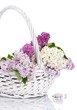 beautiful lilac flowers in basket isolated on white