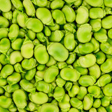 Fava or broad bean background or pattern.