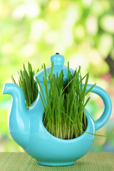 Green grass in decorative pot on bright background