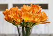 Bouquet of orange clivia flowers in glass vase.