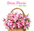 wicker basket with pink spring flowers