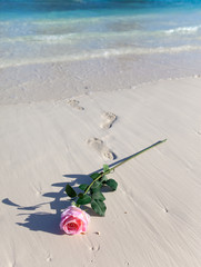 blossoming rose and the prints of bare feet going to the sea..