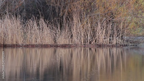 Rippling water reflections on lake with reeds