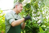 Employee working in a greenhouse
