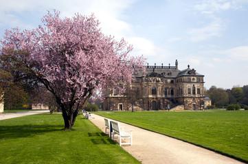 Dresden Palais im Großen Garten