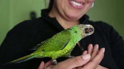 Pretty pet parrot