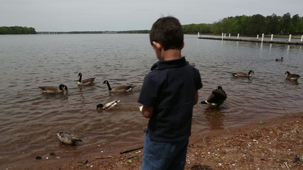 feeding the ducks and geese