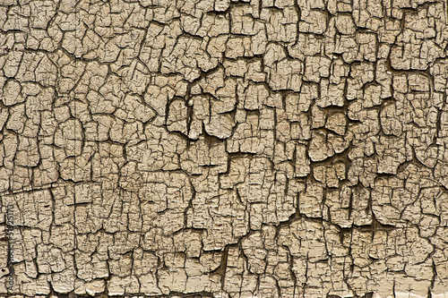 Dry cracked section of wood