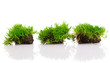 young green grass with soil isolated on white background