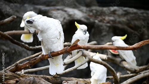 cute white parrot hold on branch