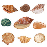 Set seashells. Vector