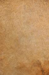 camel's skin