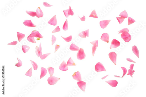 petals isolated over white with clipping path