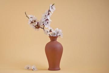 White cherry blossom in vase, light-brown background.