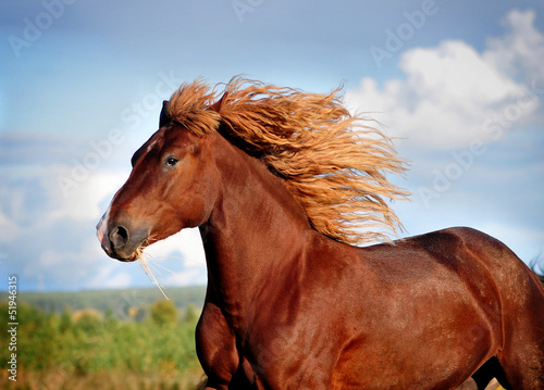 Portrait of running big beautiful horse