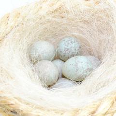 Huevos de Canaria