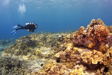 Diver on a Hawaiian Reef