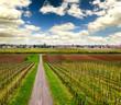 Weinberg im Frühling in der Pfalz
