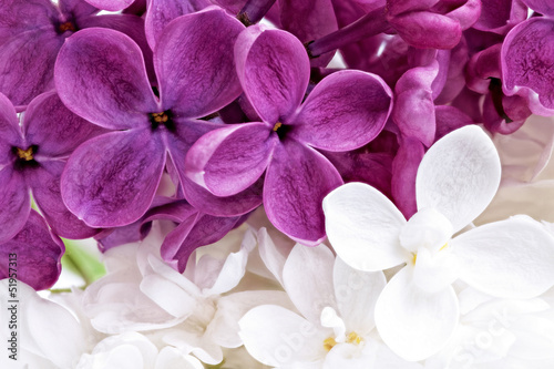 Foto op Canvas Macro Beautiful Bunch of violet and white Lilac