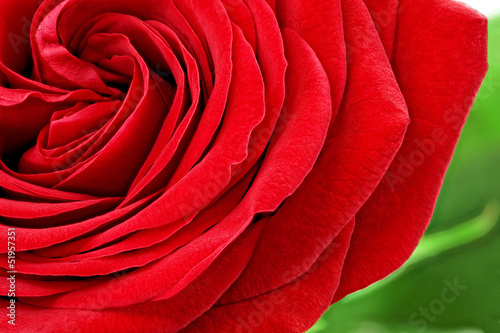 Foto op Canvas Macro Beautiful red rose flower. Closeup.