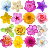 Fototapety set of Flower heads isolated on white