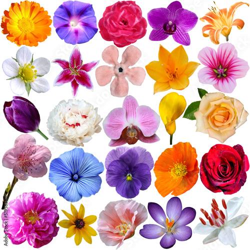 Plexiglas Pansies Flowers set