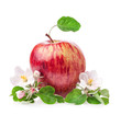 Red Apple with flowers isolated on white